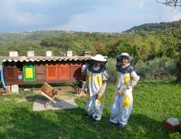Čebelji projekt